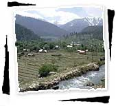 Farming at Gulmarg, Kashmir
